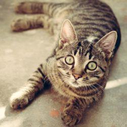 Katzenfutter Senioren