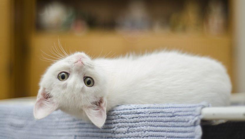 enzymreiniger katze