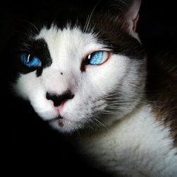 Können Katzen weinen?