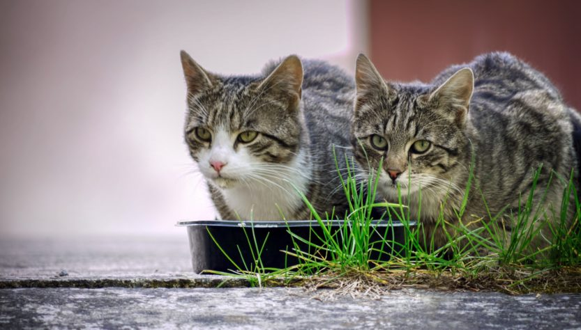 Katzenfutter Anifit